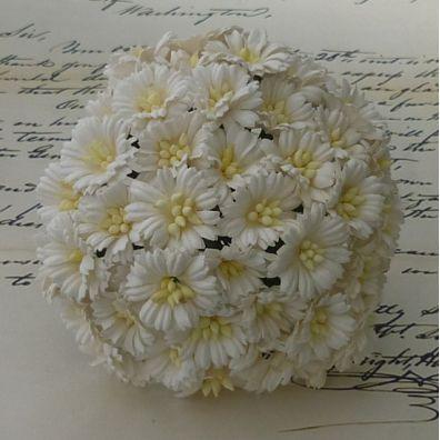 Cosmos Daisy Stem Flowers White