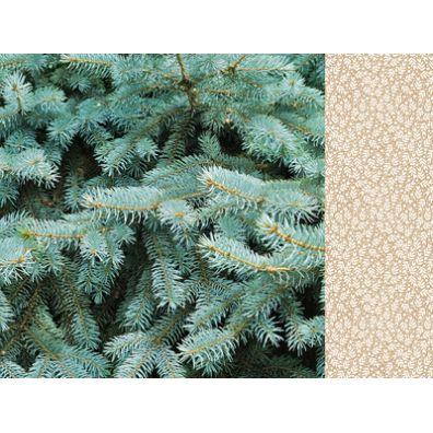 Mint Wishes - Fresh Pine mønsterpapir fra KaiserCraft