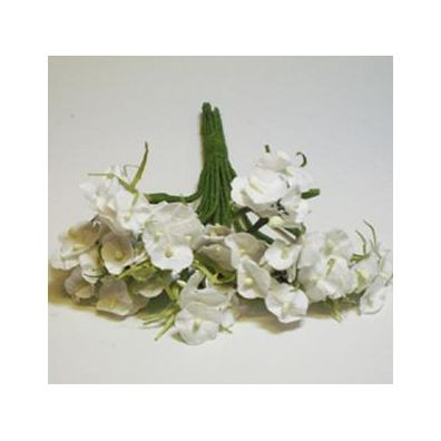 Hortensia hvid 36 stk.